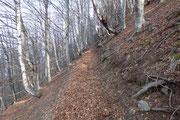 Salita ai Mont di Lanès