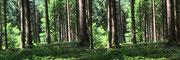 Wald ist mehr als viele Bäume (dieses und alle weiteren Bilder wurden mit einem einfachen Smartphone aufgenommen) - Foto P. Welker