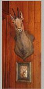 Le chamois dans l'entrée
