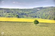 Feld bei Bad Zwesten - HDR