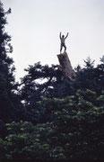樅の木の上で。地上約20M。