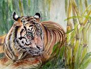 Wildlife+Zoo