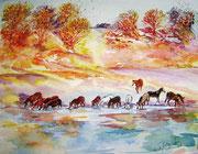 Australische Wildpferde
