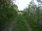 Grasweg