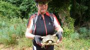Moni hilft einer Schildkröte über die Straße