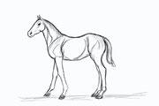 Abdul Ghofur Sketch für Driftwood-Art größeres Fohlen