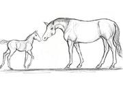 Abdul Ghofur Sketch für Driftwood-Art Stute mit kleinem Fohlen