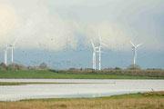 Die Windräder scheinen die Zugvögeln nicht zu stören