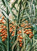 Datteln, das Brot der Beduinen - Spanien