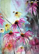 Echinazea