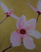 Japanische BVlutpflaumenblüte