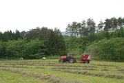 牧草刈り取り