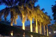 Palmen an der Zufahrt zum Hotel Mena House Oberoi in Kairo