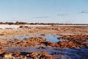 Die Stromatolithenkolonie (lebende Steine) in der westaustralischen Shark Bay (Hamelin Pool)