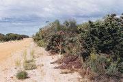 Wenige Kilometer nördlich von Perth, vollkommen andere Vegetation, für mich ein Erlebnis besonderer Art