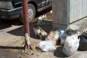 Besonders auffällig erscheint dem Touristen der in allen Ecken und Winkeln liegende Müll (mit und ohne Plastiktüte). Die Kairoer nehmen das überhaupt nicht zur Kenntnis, das ist halt so!