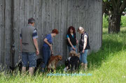 ... Warten, bis die einzelnen Hunde geprüft worden sind