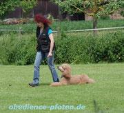 Verlassen des Hundes auf 30 Schritte Entfernung