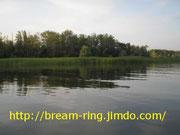 Волжский остров (лещ-кольцо)