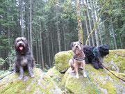 Drei Gipfelstürmer: Bart, Moritz und Luke