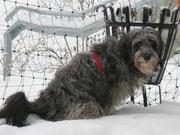 Simba im Schnee