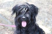 Rosi, gerettet aus dem Tierheim Vac, machte Urlaub in Italien und im Salzkammergut !