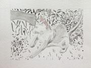 Weisse Katze, 2018, Aquarell auf Papier