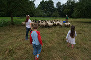 changement de parc pour les moutons