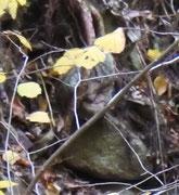 Steinwesen...breite Nase, geschlossene Augen, sitzt lächelnd an einem Waldhang