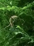 Pelziges Wesen...lange Fühler, sitzt in einem Strauch in meinem Garten