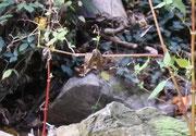 Elfe mit Kopftuch...hängt zwischen zwei Pflanzen, aus dem Kopf wächst ein Pflänzchen