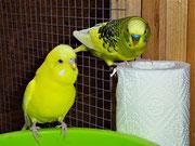 Pepe und Oscar