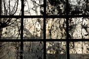 Fensterblick aus dem Schafstall im Oderbruch