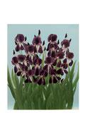 Iris (Acrylique sur toile - 64 x 54)