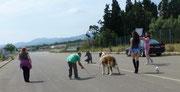 Set con i cani