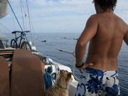Primera inmersion con ballenas...