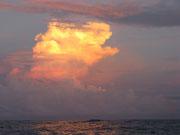Calmas intertropicales