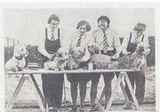 Dandie Dinmont Terrier 1934