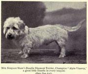 Dandie dinmont Terrier 1910