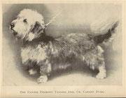 Dandie Dinmont Terrier 1904