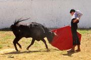 Buen son de Miguelito Osorio ante su vaca