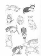 Sase's Cats 2 2016