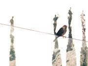 Duomo di Milano I, Fotocollage 2018