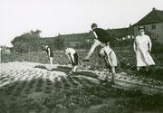 Im Garten Am Bertholdshof 56 im Hintergrund die Häuser Lange Reihe (Nordfront) -  Fotografie 1936