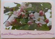 Kirschblüte am Reinheimer Teich 2011, Geburtstagskarte