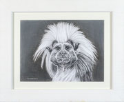 """""""Natural Attitude"""" £95 35.5 x 43 cms approx outside frame measurement"""