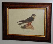 Ζώα & Πουλιά 8