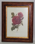 Floral & Plant 4 Gravoures Collection