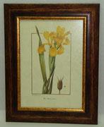 Floral & Plant 21 Gravoures Collection