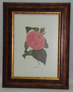 Floral & Plant 2 Gravoures Collection